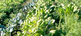 Azienda-agricola_2_testata_sezione