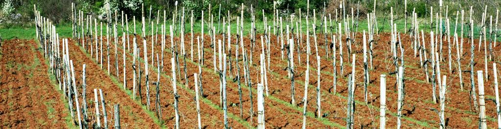 Azienda-agricola_3_testata_sezione