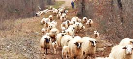 Azienda-agricola_4_testata_sezione